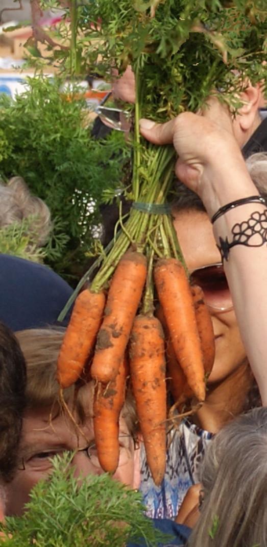 La célèbre botte de carottes de la fête du même nom....